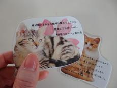 猫あつめゲーム (2).JPG