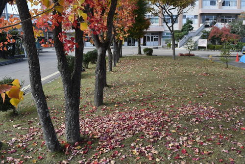 30191113-4.JPGのサムネイル画像