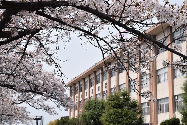 桜と校舎.JPG