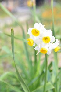 20170406春の花HP用.png