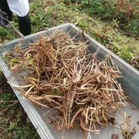 瑞穂大納言小豆の収穫体験 アグリチャンス京丹波株式会社へ