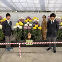 第37回日本菊花全国大会へ出展しました