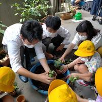 小学校での菊栽培指導